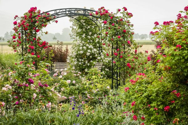 Beispiel für einen Rosenbogen